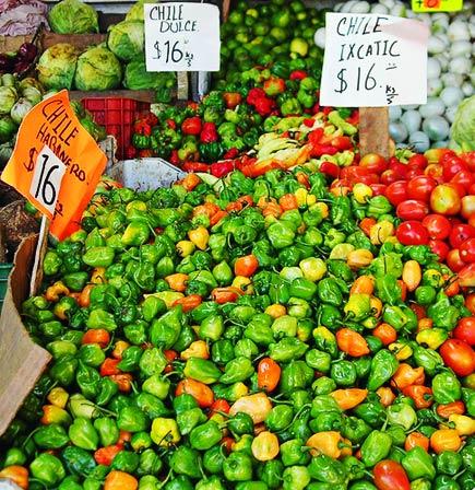 campeche chiles