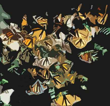 Monarch Butterfly Endangered