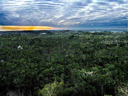 view from the nohoch mul temple at the ancient maya archaeological site of coba in the southeastern yuucatan