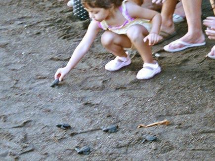 baby sea turtles at monterrico on guatemala's pacific coast